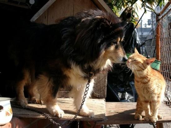 猫,画像,まとめ010