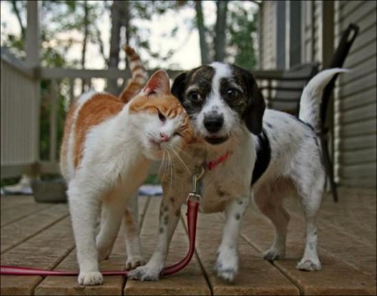 可愛い,犬,猫,画像,貼っていく012