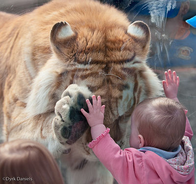 ほっこり,癒され,動物,画像,貼っていく014
