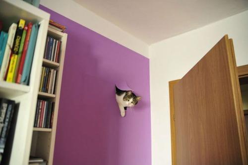 猫,画像,まとめ016