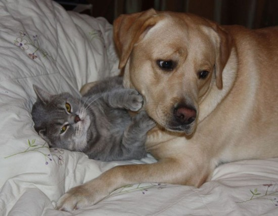 可愛い,犬,猫,画像,貼っていく016