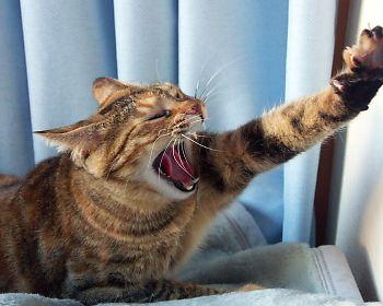 猫,画像,まとめ020