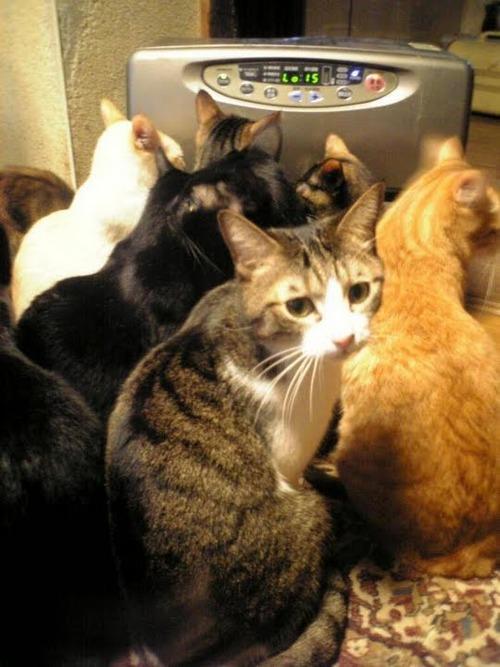 可愛い,猫,画像,貼っていく020