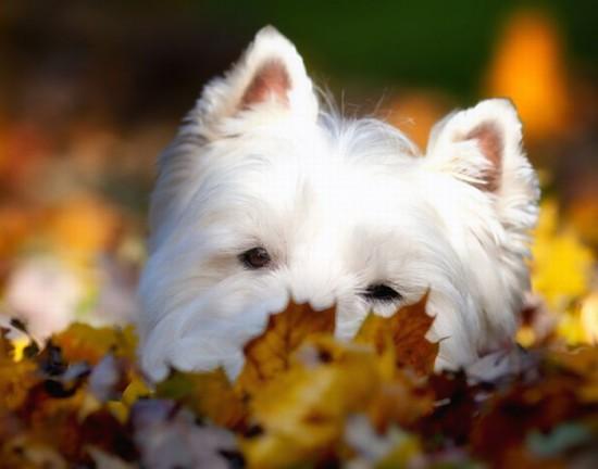 可愛い,犬,猫,画像,貼っていく020