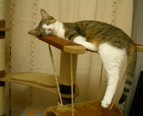 可愛い,猫,画像,貼っていく022