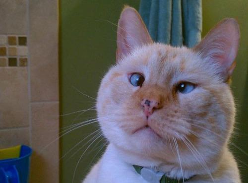 猫,画像,まとめ026