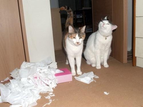 可愛い,猫,画像,貼っていく026