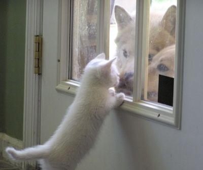 猫,画像,まとめ028