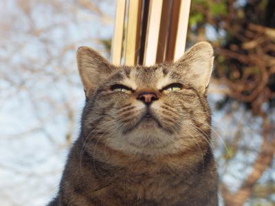 喜怒哀楽,可愛い,猫,画像,貼っていく001