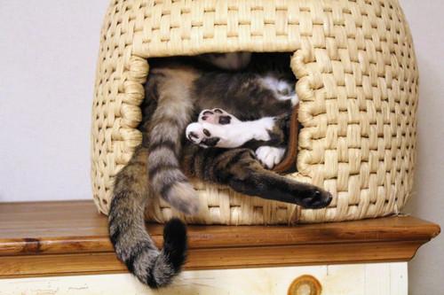 猫ちぐら,遊ぶ,可愛すぎる,猫たち,画像,貼っていく001