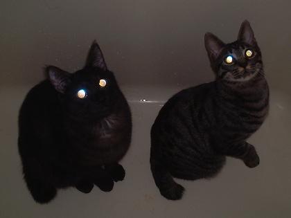 暗闇,ギラリ,目,光らせる,猫,画像,貼っていく001