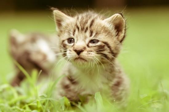 なんだか,まったり,癒される,猫,画像,貼っていく001