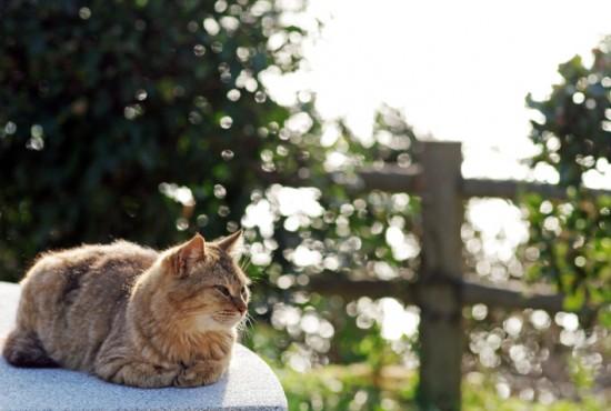 ぐでん,可愛い,のんびり,猫,画像,貼っていく001