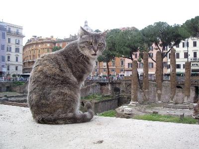 世界,可愛い,猫,画像,貼っていく002