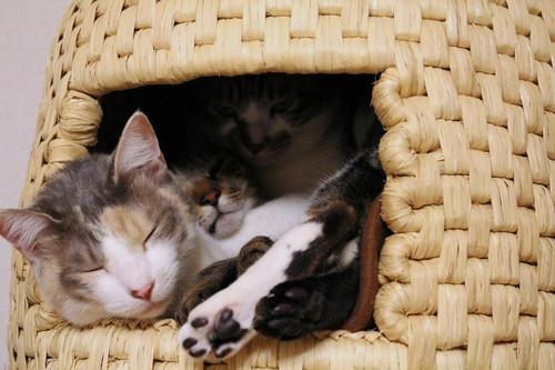 猫ちぐら,遊ぶ,可愛すぎる,猫たち,画像,貼っていく002