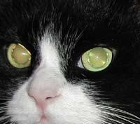 暗闇,ギラリ,目,光らせる,猫,画像,貼っていく002