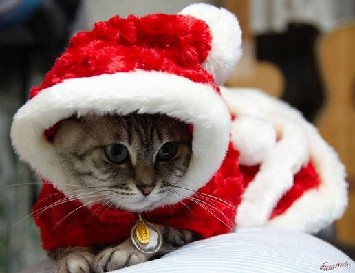 サンタコス,超絶,可愛い,猫ちゃん,画像,貼っていく002