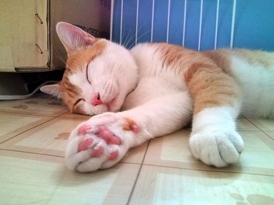 触りたく,にゃんこ,ぷにぷに,肉球,画像,貼っていく,猫002