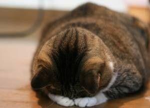 可愛すぎ,悶える,猫,画像,貼っていく002