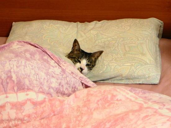 寝相,良すぎる,猫,画像,貼っていく002
