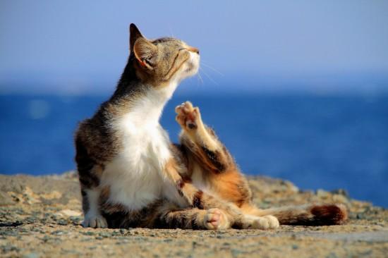 ぐでん,可愛い,のんびり,猫,画像,貼っていく002