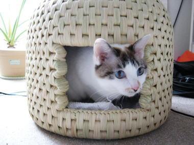 猫ちぐら,遊ぶ,可愛すぎる,猫たち,画像,貼っていく003