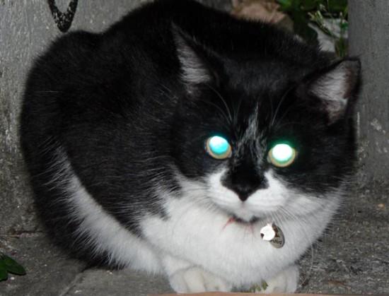暗闇,ギラリ,目,光らせる,猫,画像,貼っていく003
