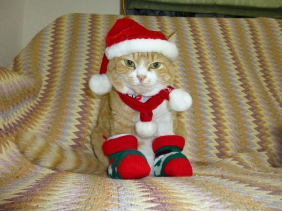 サンタコス,超絶,可愛い,猫ちゃん,画像,貼っていく003