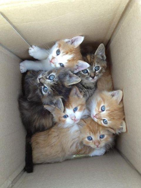 可愛すぎ,悶える,猫,画像,貼っていく003