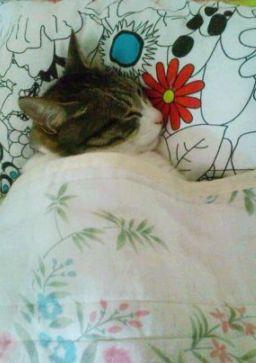 寝相,良すぎる,猫,画像,貼っていく003