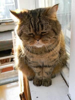 喜怒哀楽,可愛い,猫,画像,貼っていく003
