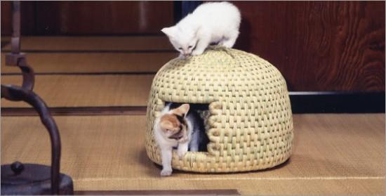 猫ちぐら,遊ぶ,可愛すぎる,猫たち,画像,貼っていく004