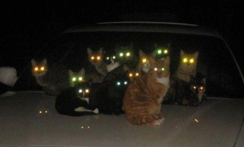 暗闇,ギラリ,目,光らせる,猫,画像,貼っていく004