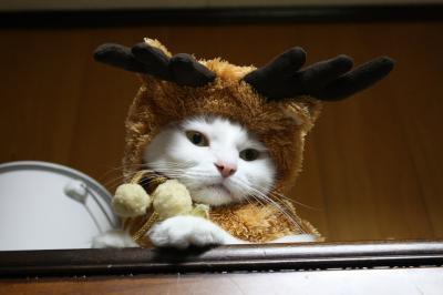 サンタコス,超絶,可愛い,猫ちゃん,画像,貼っていく004
