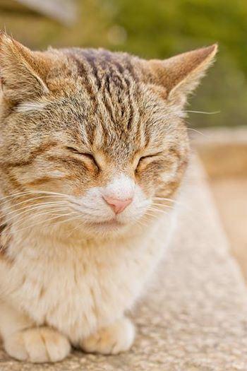 なんだか,まったり,癒される,猫,画像,貼っていく004
