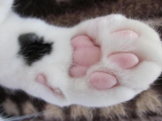 触りたく,にゃんこ,ぷにぷに,肉球,画像,貼っていく,猫004