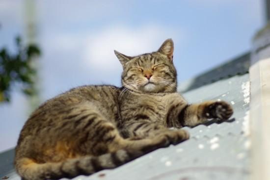 ぐでん,可愛い,のんびり,猫,画像,貼っていく004
