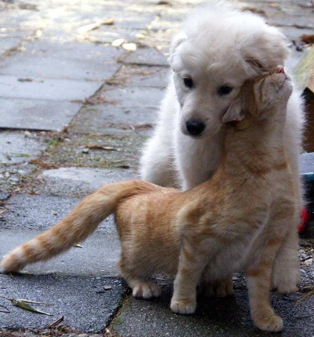 本当,仲良し,猫,犬,画像,貼っていく004