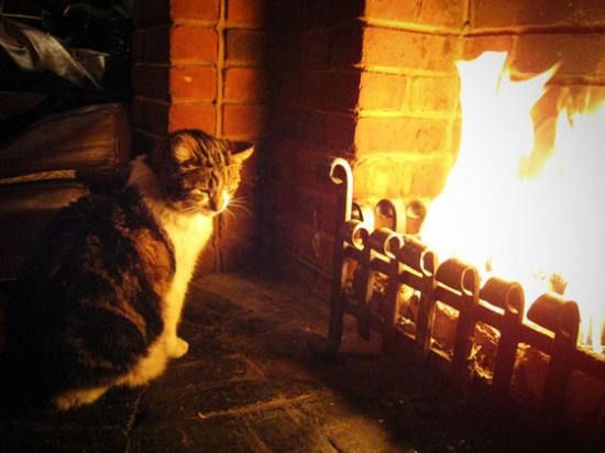 寒い,冬,ストーブ,猫,画像,貼っていく004
