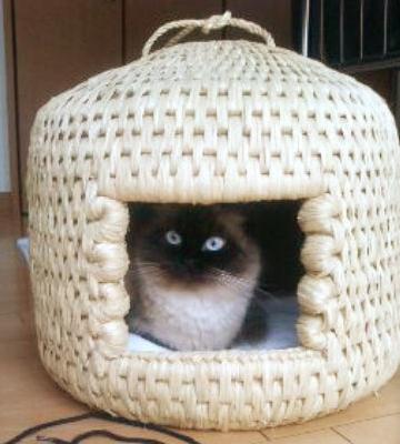 猫ちぐら,遊ぶ,可愛すぎる,猫たち,画像,貼っていく005