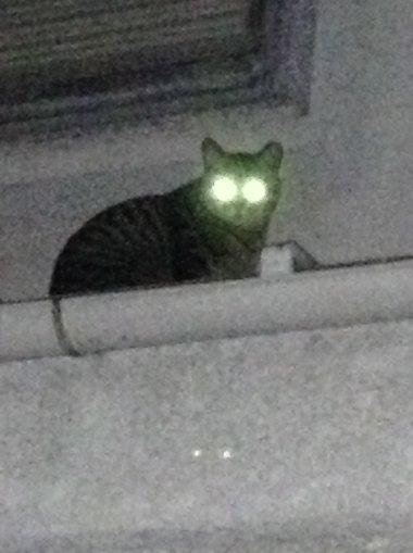 暗闇,ギラリ,目,光らせる,猫,画像,貼っていく005