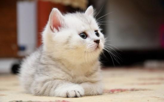 なんだか,まったり,癒される,猫,画像,貼っていく005