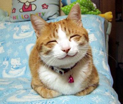 喜怒哀楽,可愛い,猫,画像,貼っていく006