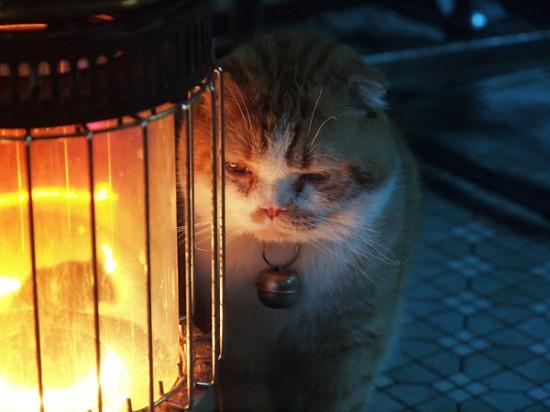 寒い,冬,ストーブ,猫,画像,貼っていく006