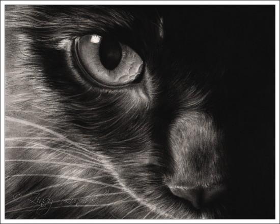 神秘的,美しい,黒猫,画像,貼っていく006