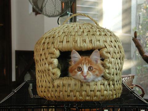 猫ちぐら,遊ぶ,可愛すぎる,猫たち,画像,貼っていく006