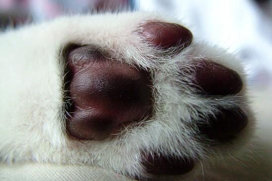 触りたく,にゃんこ,ぷにぷに,肉球,画像,貼っていく,猫006