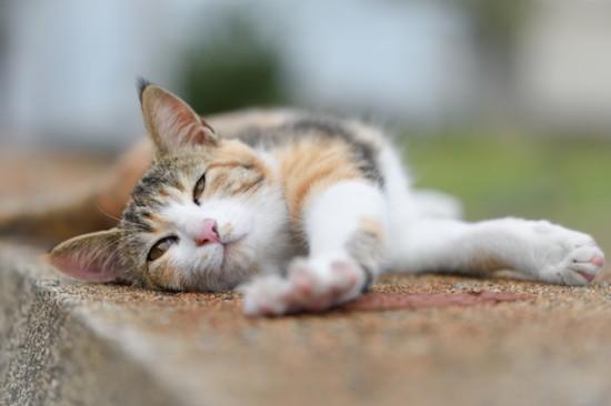 ぐでん,可愛い,のんびり,猫,画像,貼っていく006