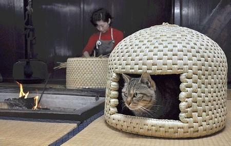 猫ちぐら,遊ぶ,可愛すぎる,猫たち,画像,貼っていく007