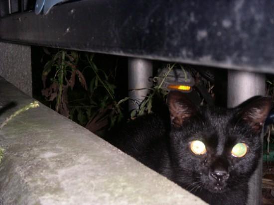暗闇,ギラリ,目,光らせる,猫,画像,貼っていく007